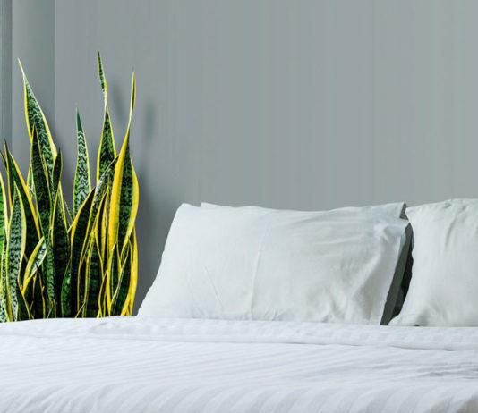 snakeplant, befroom, flowers